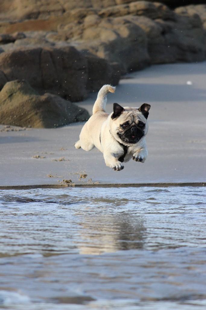mascotas, viajar con mascotas, viajes, pasear con tus mascotas, llevar a tus mascotas de viaje contigo