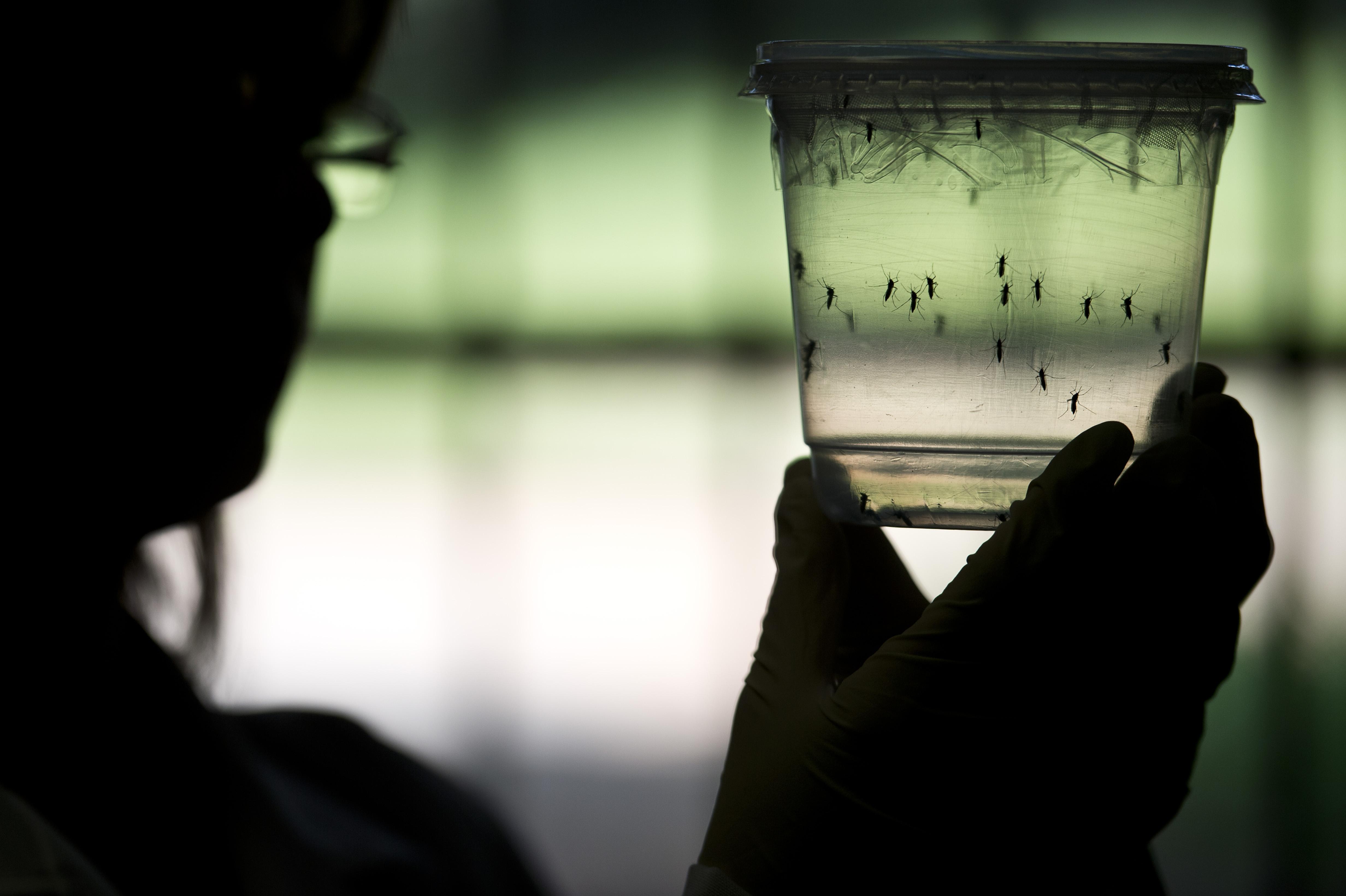El profesor Fergurson, científico del Imperial College de Londres, apuntó que cualquier esfuerzo para tratar de detener la trasmisión del virus podría, por el contrario, ser contraproducente.