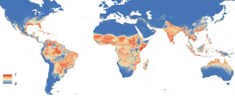 En rojo, la distribución del mosquito 'Aedes aegypti' en el mundo