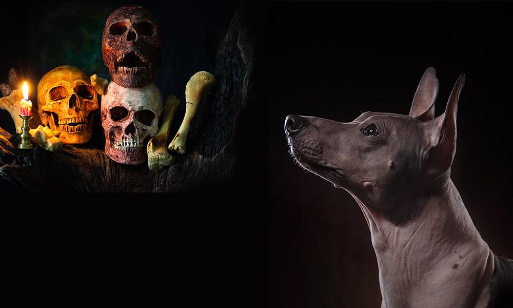 perro muerte