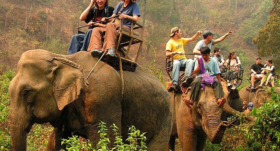 elefantes sillas