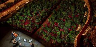 Concierto para plantas, cuarterto, Giacomo Puccini