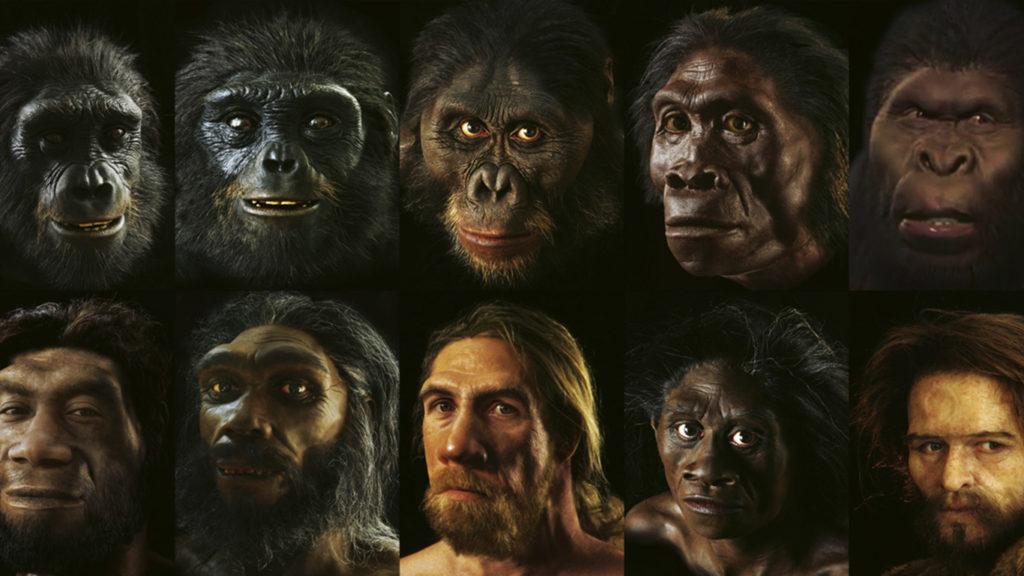 Evolución, homo sapiens, humanos