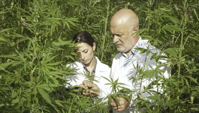 cañamo, marihuana, brasiere, medio ambiente, organico, cancer de mama, prevenciòn