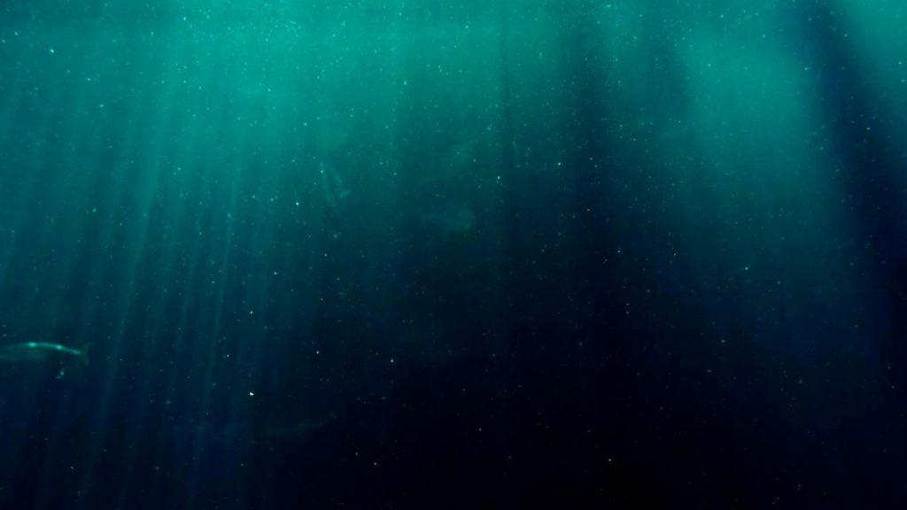 100 millones de años, 40 kilos, Agencia de Ciencia y Tecnología de la Tierra y el Mar de Japón, Agua, antigüedad, ausencia de alimentos, Científicos, científicos estadounidenses, científicos japoneses, Comida, condiciones, descubrimiento, Equipo, Estados Unidos, estadounidenses, estudio, fondo marino, forma, formar, formarse, grupo, Japón, japoneses, Materia orgánica, microbiólogo, microbios, Milagro, nutrientes esenciales, objetos, océano, Océano Pacífico, oxigeno, partículas, Partículas cuánticas, poderosos, Presión, Profundidades, profundidades del océano, resistentes microbios, revivir, rocoso, Sedimentos, sin vida, sótano, Steven D'Hondt, subyacente, suelo, suministros de energía, superficie, un millón de años, Universidad de Rhode Island, vida atrapada entornos alta presión fósiles, vida microscópica, vivos, Yuki Morono