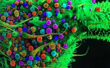 marihuana, microscopios, ciencia, historia, Micrographia, Zacharias Janssen, William Harvey, Hook, células, microorganismos