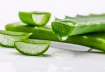 sábila, diabetes, acné, vitaminas, calcio, aceite de sábila, propiedades de la sábila, aloé vera, flora intestinal, nutrientes, aminoácidos