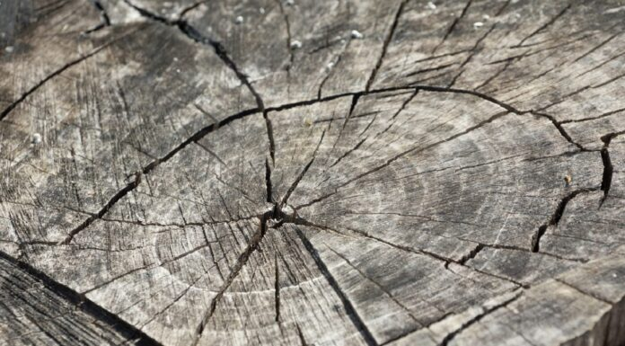 explosiónde las supernovas, supernovas, cicatricesen los árboles, árboles, cuerpos celestes, tierra, sol, cambio climático, supernova de Vela, Robert Brakenridge, International Journal of Astrobiology