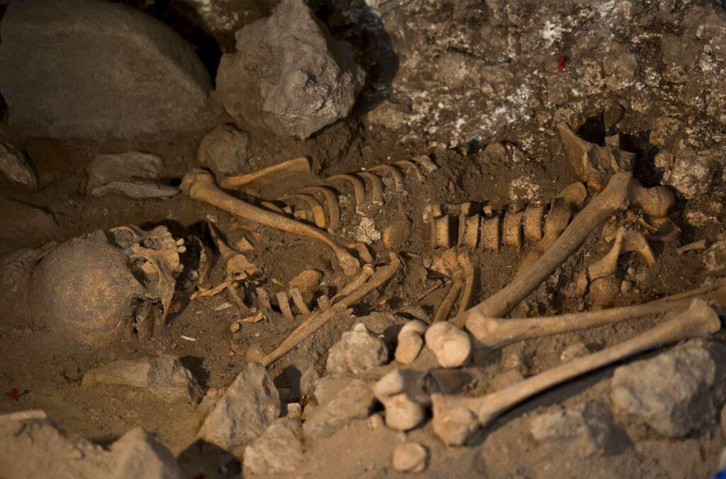 esqueleto, paleontología, hibernar