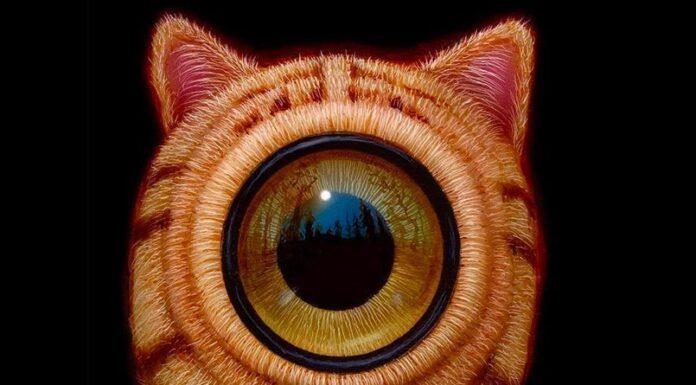 gato hattori