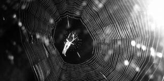 Telaraña, tela de araña, araña, música